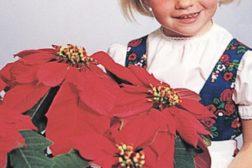 Annette Hegg, foredler Thormod Heggs datter, og planten hun gav navn til. Foto: Sønstrød Fotografene