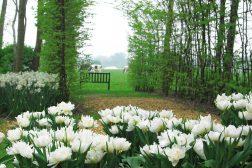 Park, krukker med hvite tulipaner