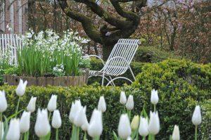 Hage med klosterklokker og tulipaner