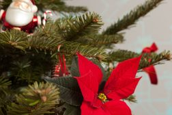 2014-poinsettia-christmasbaubles-step5