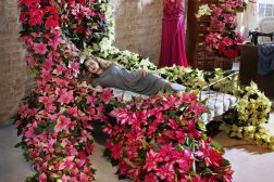 2014-poinsettia-sleepingbeauty02_red