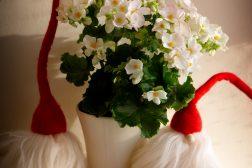 Hvit juleglede med nisseselskap