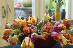 Vårkick med tulipaner
