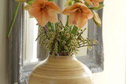 Gyldne Amaryllis i vase