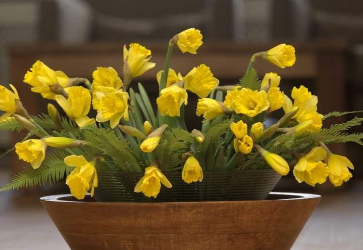 Narcissus, påskelilje