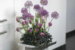 Krukke med tulipaner og Allium, eller prydløk