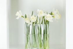 Påskelilje i vase