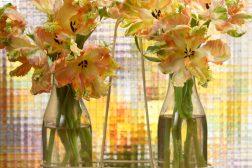 Spenstige tulipaner i oransje