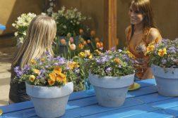 Blomster på hagebordet – store krukker gjør det lettere å holde blomstene fine