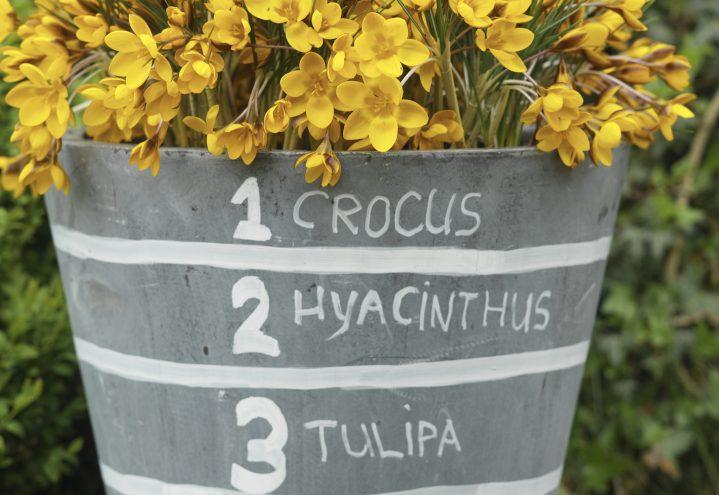Lag på lag - plant løkkrukkene i flere lag og få lang blomstring!
