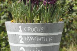 Lag på lag – plant løkkrukkene i flere lag og få lang blomstring!