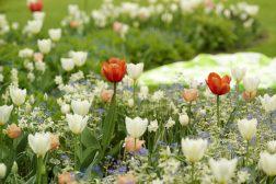 Blomsterbed med vårløk