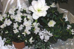 Hvit jul med blomster!