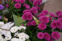 Forny blomsterkassene etter ferien