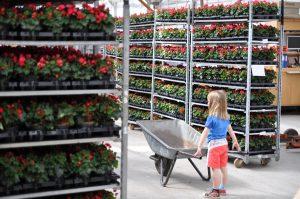 Liten jente i gartneriet
