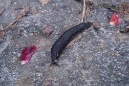 Hvilke planter spiser sneglene?