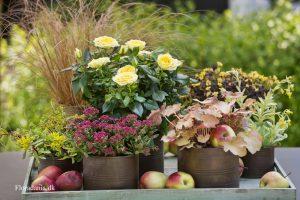 Høstfat med epler og høstplanter