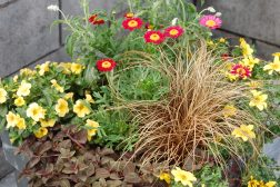 Sommerkrukke i høstfarger