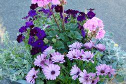 Sommerkrukke i rosa-lilla