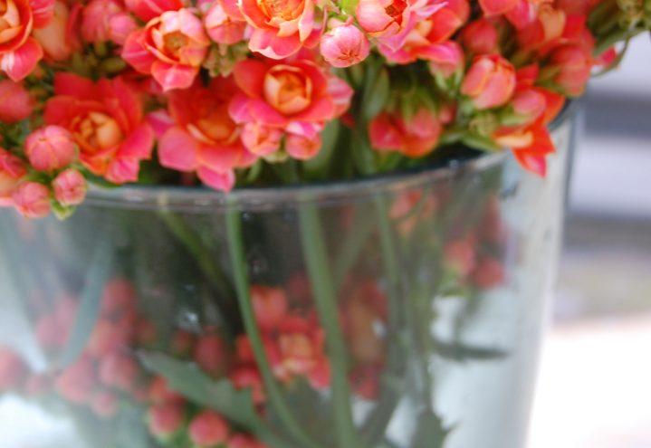 Ildtopp er en fantastisk holdbar blomst, også i vase og bukett!