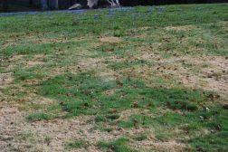 Vårtrist gressplen