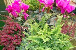Krukke med alpefiol, bregne, røsslyng og eføy