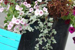 Sommerblomstkrukke