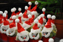 Julenissekaktuser