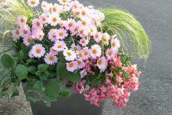Sommerkrukke i rosa