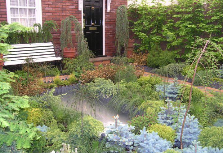 Den vintergrønne hagedrømmen