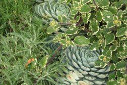 Grønne nyanser og spennende former i sommerbed og krukker