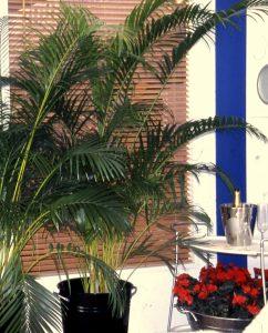 Grønne palmer i stuen