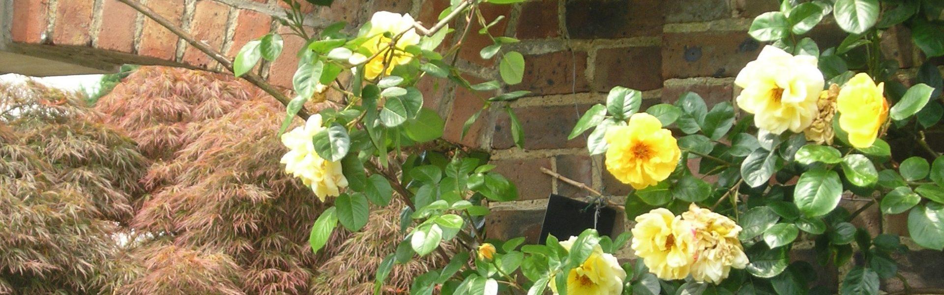 Klatrende planter – skap din oase