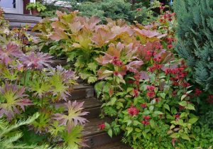 Storbladete stauder gir frodig hage
