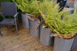 Store krukker med herdige stauder er for deg som ønsker en lettstelt hage!