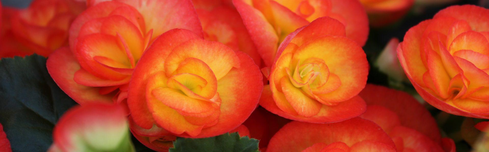 Påskestemning med blomster