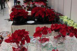 Julemesse med julestjerner, borddekorasjoner med julestjerne