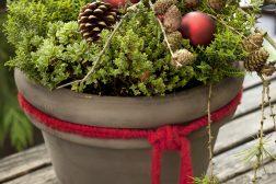 Julepotte pynter utendørs med grønne vekster