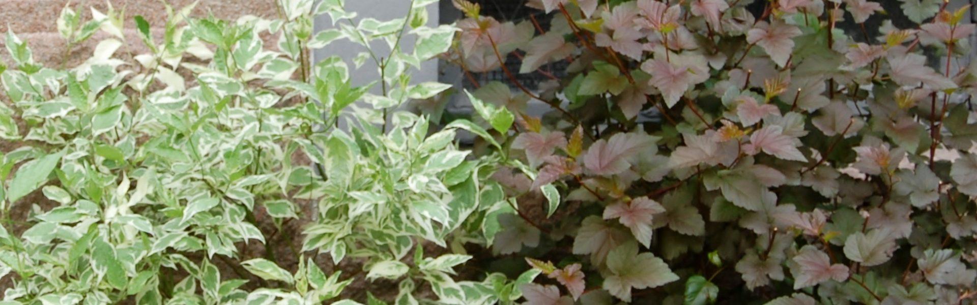Slik planter du busker