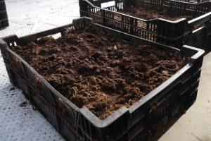 Kasser med jord klare for blomsterløk