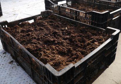 Hvorfor bruker gartnerne torv når de produserer planter?