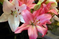 Den guddommelige blomsten