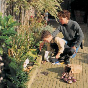 Sette vårløk om høsten