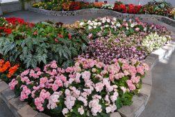 Hvor bredt skal blomsterbedet være?