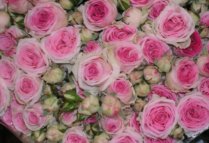 Rosebukett i rosa