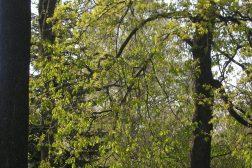 Grønt vårløv
