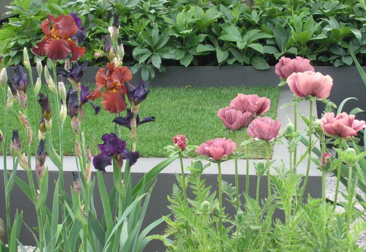 Avdempede farger på hagestaudene