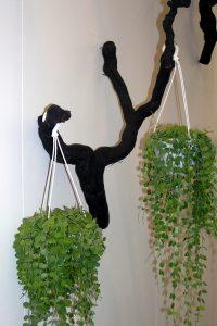 Grønne planter i hengepotter
