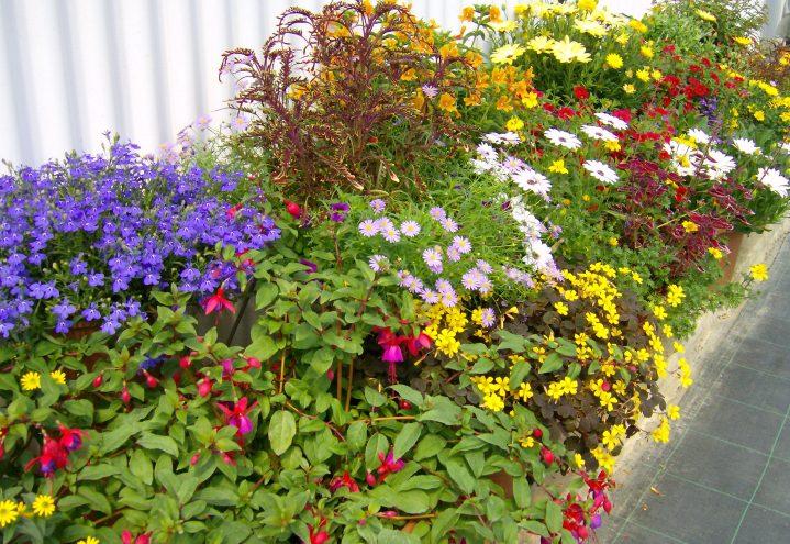 Blomsterbed med sommervekster