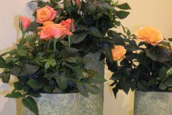 Potteroser, oransj dekorasjon